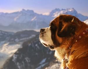 Самая-сильная-собака-в-мире