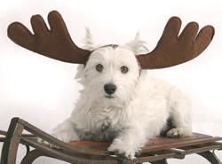 dog-roga2