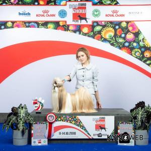 EuroDogShow-2018.-Польша-Варшава.-Результаты-рингов-Ши-Тцу