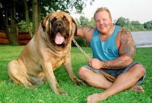 Самые-крупные-породы-собак.-Неаполитанский-мастиф