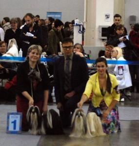 Результаты-рингов-Ши-Тцу-на-международной-выставке-Россия-2.-BOB-и-BOS